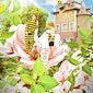 Bijen- en bloesemfeest in boomgaard van Coloma