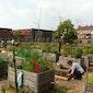 Voedsel voor de stad / stadslandbouw in Brugge - wandeling