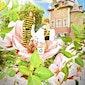 26/04: Bijen- en bloesemfeest in de boomgaard van Coloma, Sint-Pieters-Leeuw