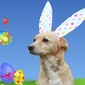Paaszoektocht voor honden