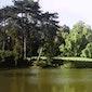 Begeleide zondagswandeling mei : Inheemse bomen in de Plantentuin Meise