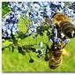 Alles over bijtjes en biekes