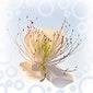 LEZING Houden van jeZelf kun je leren en hoe het plantenmedicijn Ayahuasca je daarbij kan ondersteunen