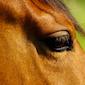 Workshop voor tieners met de inzet van paarden