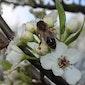 Bijen in de kijker
