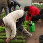 Ecologisch tuinieren: Hoog- en halfstamfruit