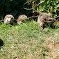 Egels: Avondvoordracht met wandeling door Frouke Vermeulen