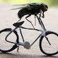 Schatten van Vlieg in Lede (Openingsfeest fietstocht)