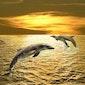 """""""Open je voor de nieuwe codes van het Gouden dolfijnennetwerk""""."""