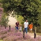 De natuur in zomerdracht – Limburg - De Wijvenheide