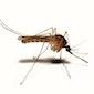 Wat vliegt daar? Muggenwandeling