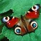 Fladderende vlinderzondag