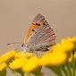Het Grote Vlinderweekend