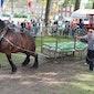 Paardenmarktfeesten Kaprijke