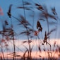 Sunset Naturefulness