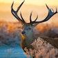 Kaaiman - Bambi - Mijn lijf blijft groeien maar het weet niet waar naartoe - GEANNULEERD