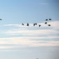 Sciencecaching: op zoek naar trekvogels in Provinciedomein Het Vinne