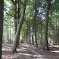 Natuurwandeling in Lozerbos