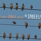 de Spreeuw | studio Orka 6+