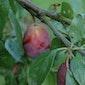 Fruit uit eigen tuin - sessie 'De grote vier'