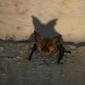 Vleermuizenwandeling