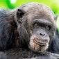 Uitstap Olmense Zoo