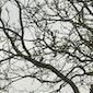Bomen en hun symboliek