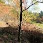 Bomenwandeling in het Hagelands Bos