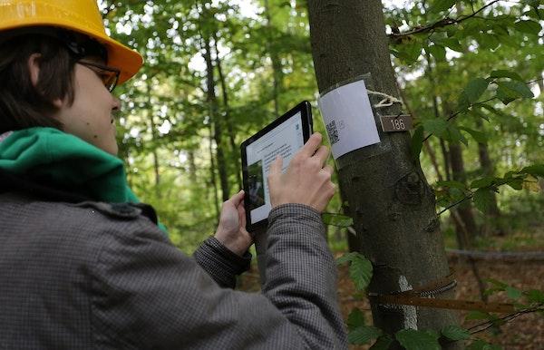 Het Aelmoeseneiebos, een online pratend bos met tweetende bomen