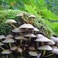 paddenstoelenwandeling Gerhagen