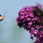 Wereldcafe : Lezing : Is biodiversiteit hot?