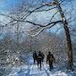 Kom uit je kot :  Winterse ontmoetingen –  De wijvenheide van een andere kant bekeken