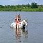 Activak jeugdkamp - Natural horsemanship (13-17 jaar)