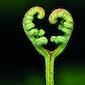 Valentijn in de natuur