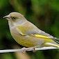 Vogeltrek (met een knipoog naar tuinvogels)