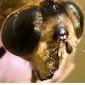 Week van de insect : theorieles insecten