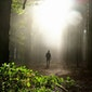 Van passie tot burn-out (en terug): Naar een natuurlijke balans en meer energie - Volzet