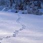 Speuren naar sporen (winterwandeling)