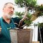 Twintig jaar bonsaischool in Dendermonde: Open Atelierdagen