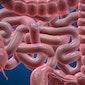 voordracht preventie darmkanker