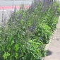 Hoe je tuin omvormen tot een kringlooptuin?