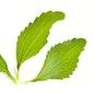 De waarheid over stevia