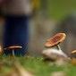 Natuurwandeling 'Speuren naar paddenstoelen'