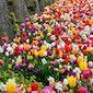 Daguitstap Floralia
