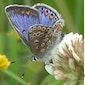 Bijen- en vlinderfeest