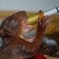 Cursus verzorging van jonge dieren