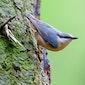 Vroege vogels met mogelijkheid tot aansluitend ontbijt