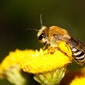 Infoavond: Koester je bijen-buren!