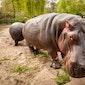 Grabbelpas Bilzen: Zoo Antwerpen