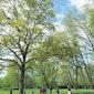 Dag van het Park Ninove